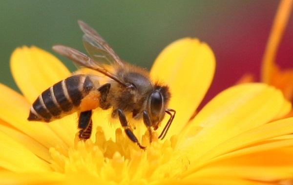 Mất mạng vì ong vò vẽ, cần nâng cao cảnh giác ngay lập tức